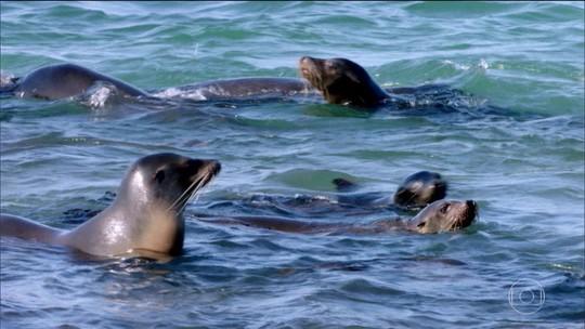 Charles Darwin se inspirou nas Ilhas Galápagos para criar sua revolucionária teoria