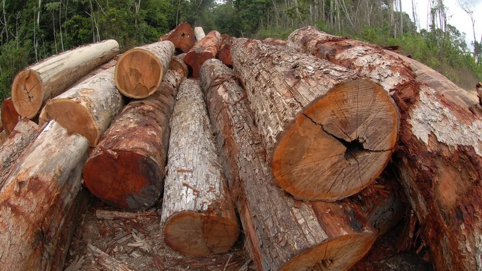 Somente troncos certificados estão autorizados a circular pelas rodovias brasileiras (Foto: Ministério do Meio Ambiente)