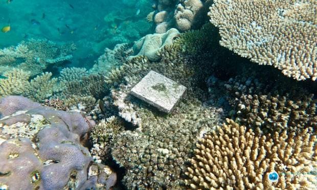 O número total de corais novos caiu 89% na Grande Barreira de Coral australiana, que é o maior sistema de corais do mundo (Foto: Tory Chase/ARC CoE for Coral Reef Studies)