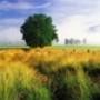 Papel de Parede: Spring Field