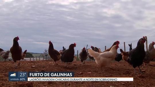 Ladrões invadem chácaras em Sobradinho para furtar galinhas