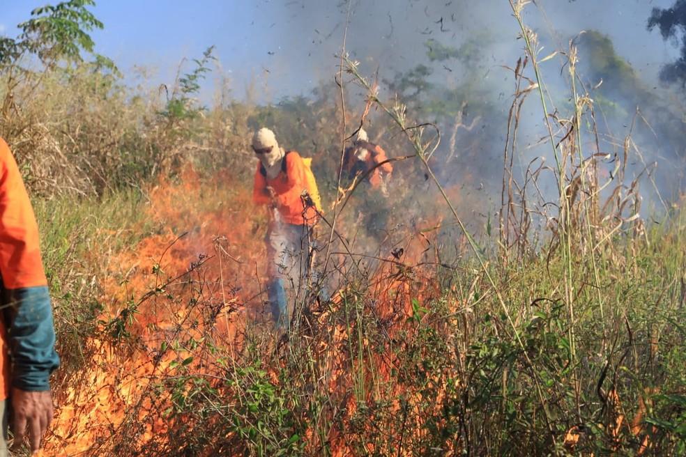 Uso do fogo controlado pode impedir que queimadas causem devastação — Foto: Fernando Alves/Governo do Tocantins