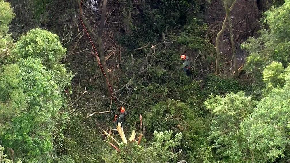 Socorristas tentam chegar em área de mata fechada onde caiu avião em SP — Foto: Reprodução TV Globo