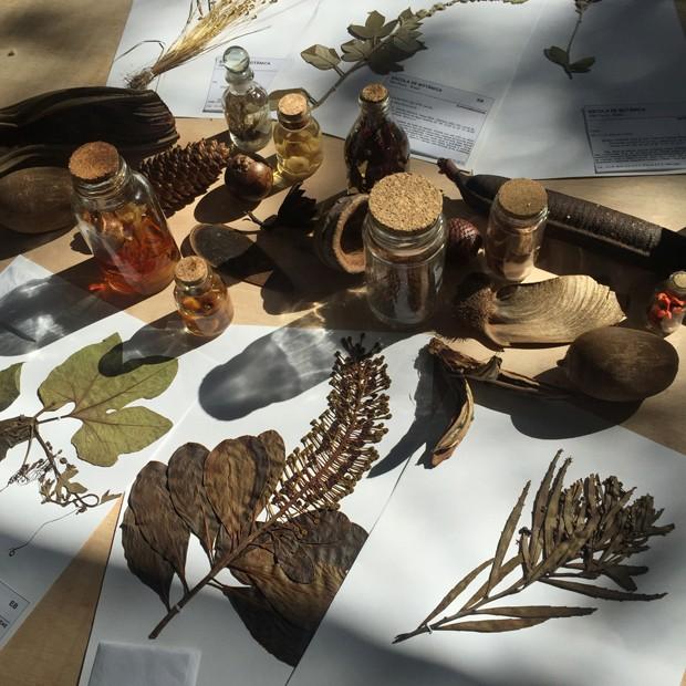 Herbário: entenda a técnica e saiba como usar na decoração (Foto: Divulgação)