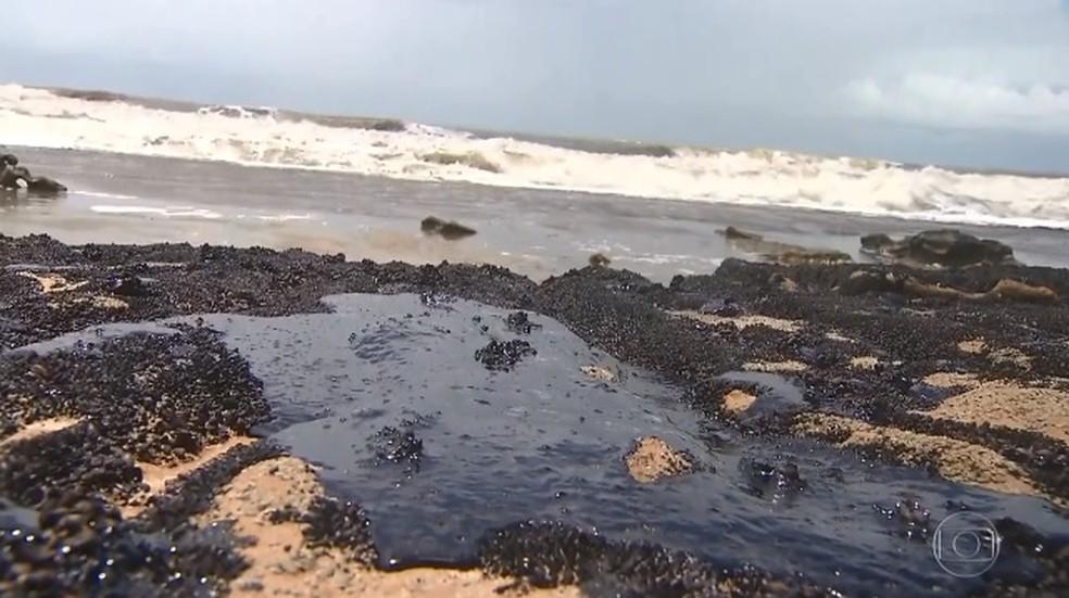 Um ano após vazamento de óleo, biodiversidade marinha na Bahia ainda tem danos — Foto: Reprodução/ TV Globo