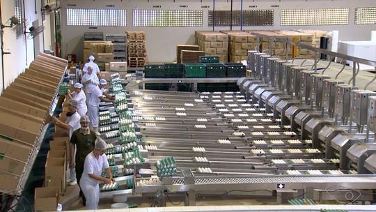 Cooperativas crescem e ajudam a alavancar o agronegócio no ES