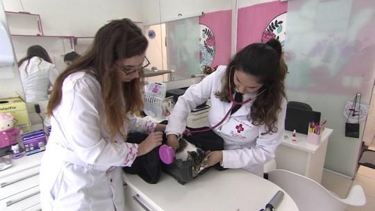 Veterinária fatura com clínica com atendimento especial para gatos