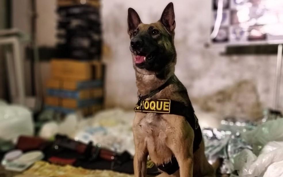 Cadela encontrou drogas em barraco em Paraisópolis — Foto: Divulgação/Polícia Militar