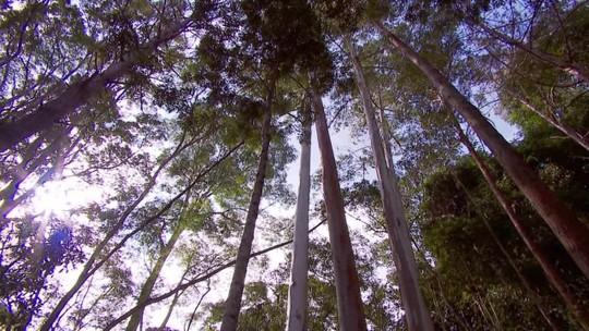 UFV desenvolve pesquisa com árvores nativas do Brasil