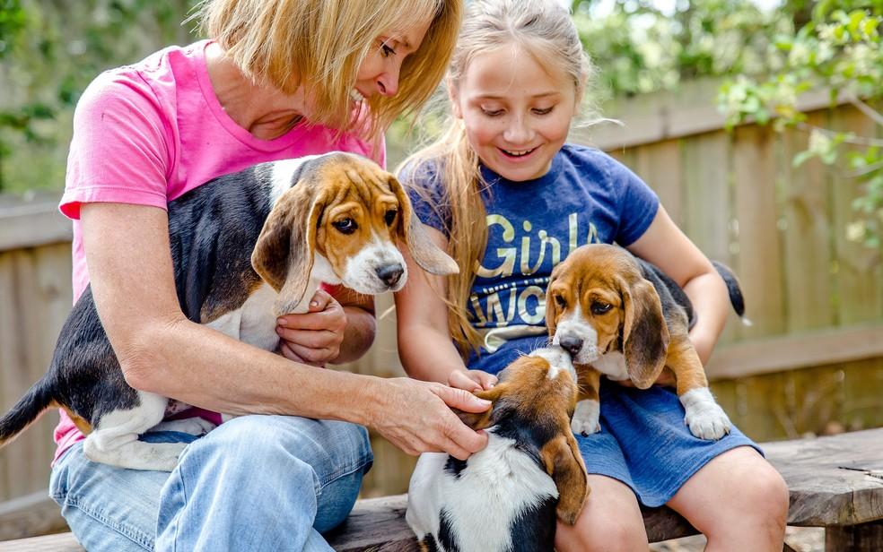 A pesquisadora Heather Ann Junqueira com os cães da raça beagle usados no estudo de câncer — Foto: BioScentDX/Divulgação