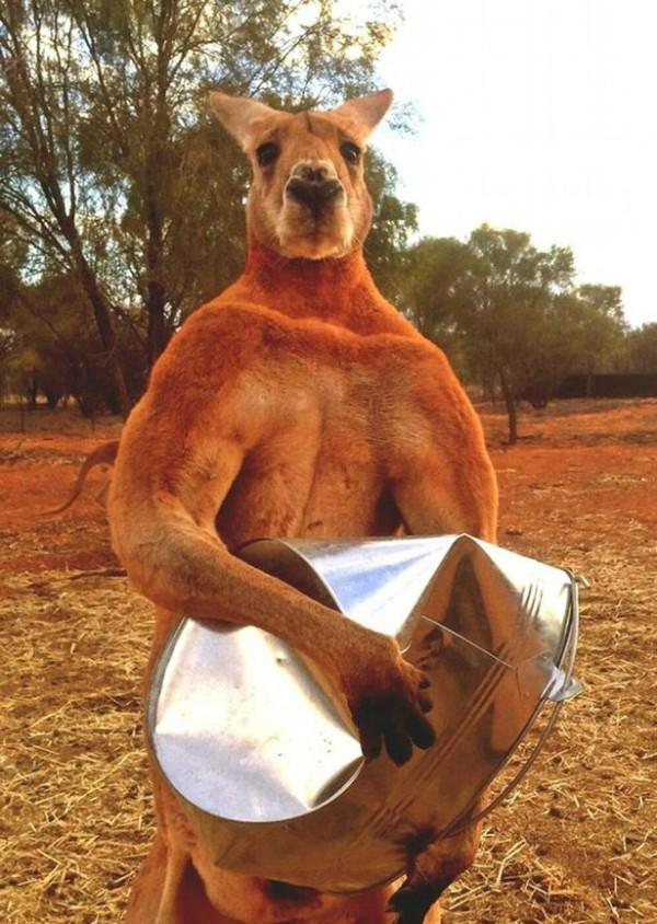 Roger canguru apelidado de Schwarzenegger (Foto: Reprodução Facebook)