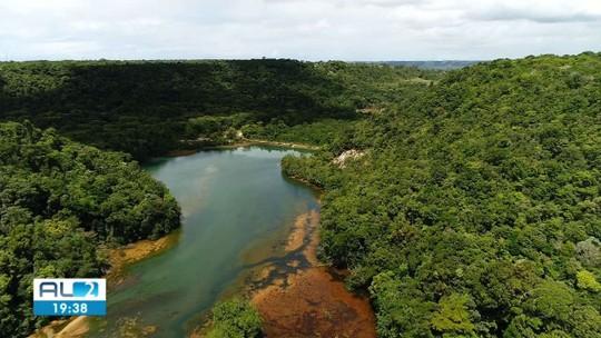 Alagoas foi o 2º estado que menos desmatou Mata Atlântica em 2018, aponta levantamento