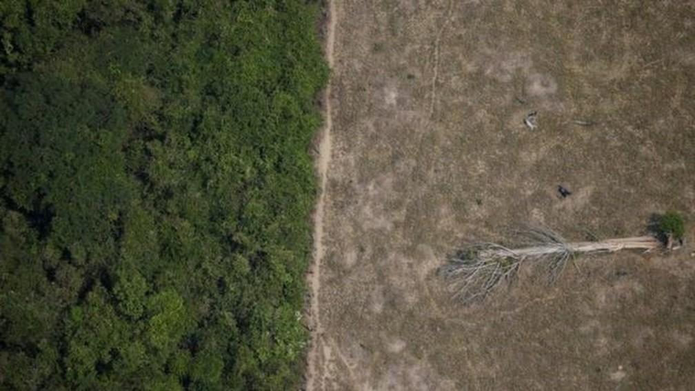 Estimativas apontam que Amazônia pode sofrer dano ambiental irreversível em até 30 anos — Foto: Reuters via BBC