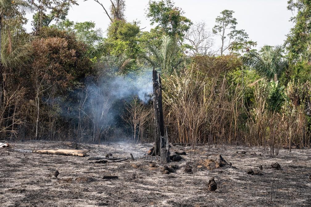 Foco de queimada em rodovia federal de Rondônia em 2019 — Foto: Fábio Tito/G1