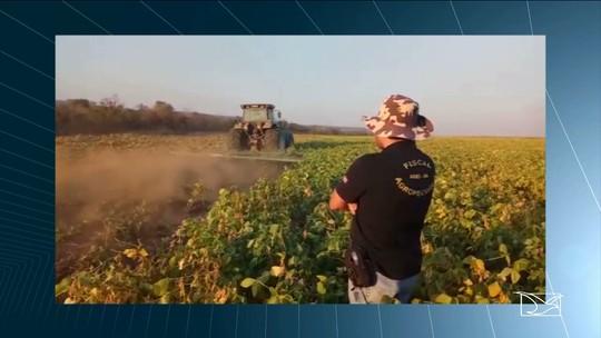 Operação da Aged destrói 174 hectares de lavoura de soja no MA