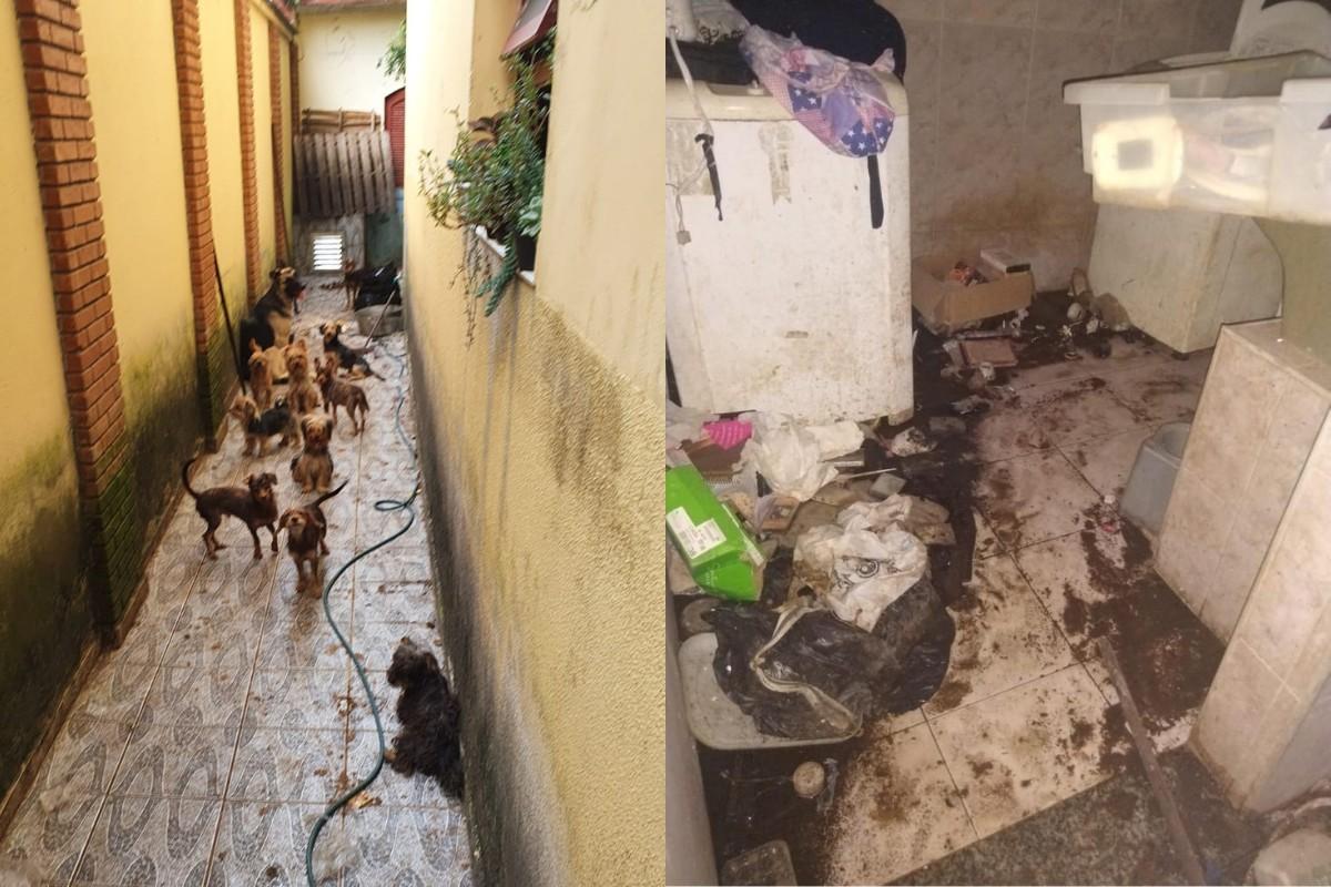 Cães que comiam restos de ração e fezes são resgatados e homem é preso no litoral de SP