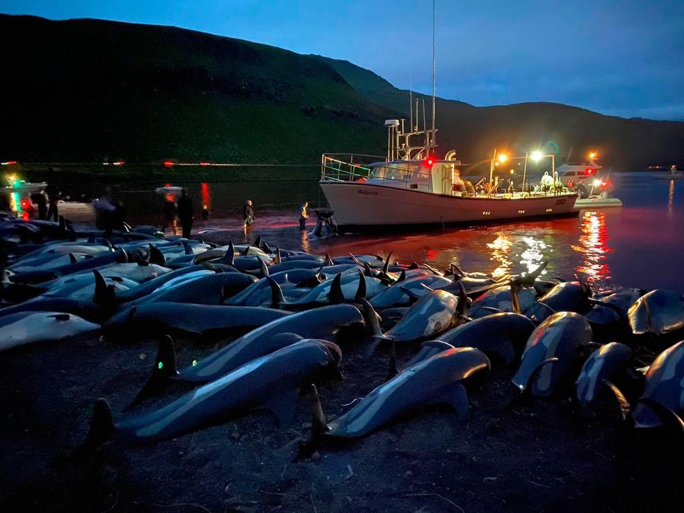 Imagens divulgadas pela Sea Shepherd Conservation Society mostram matança de golfinhos nas Ilhas Faroé, no Atlântico Norte. — Foto: Sea Shepherd Conservation Society/via AP