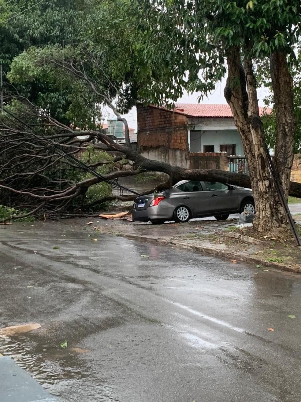 Carro que estava estacionado na praça foi danificado quando uma das árvores caiu. — Foto: Reprodução/Redes Sociais