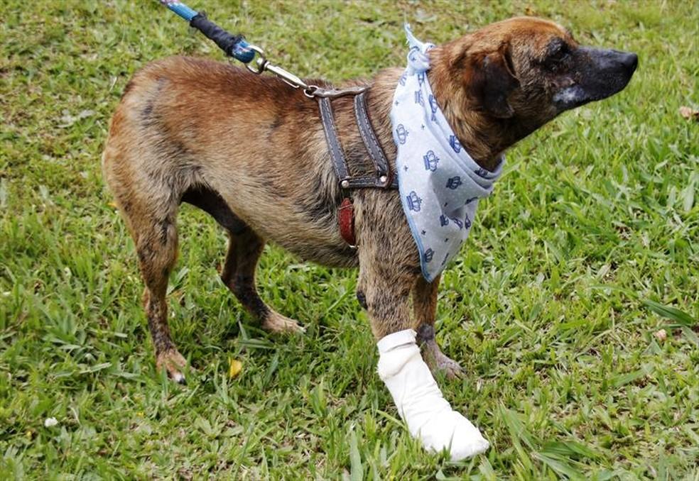 Cachorros em risco nas ruas de Curitiba são atendidos pelo 'Samu veterinário' — Foto: Lucilia Guimarães/SMCS