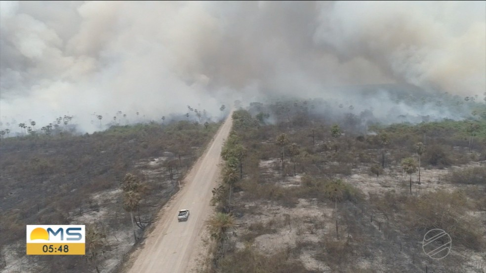 Cinza e fumaça mata à dentro no Pantanal de MS — Foto: Reprodução/TV Morena