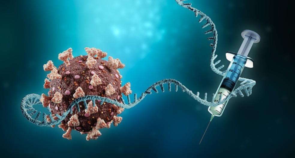 Vírus ancestral foi detectado em grupo de pacientes que apresentou mortalidade de 80% (Foto: Universidade Johns Hopkins)