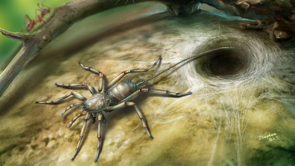Perspectiva ilustrada do aracnídeo Image caption Aracnídeo, que viveu há 100 milhões de anos, lembra uma aranha como uma cauda (Foto:  Bo Wang)