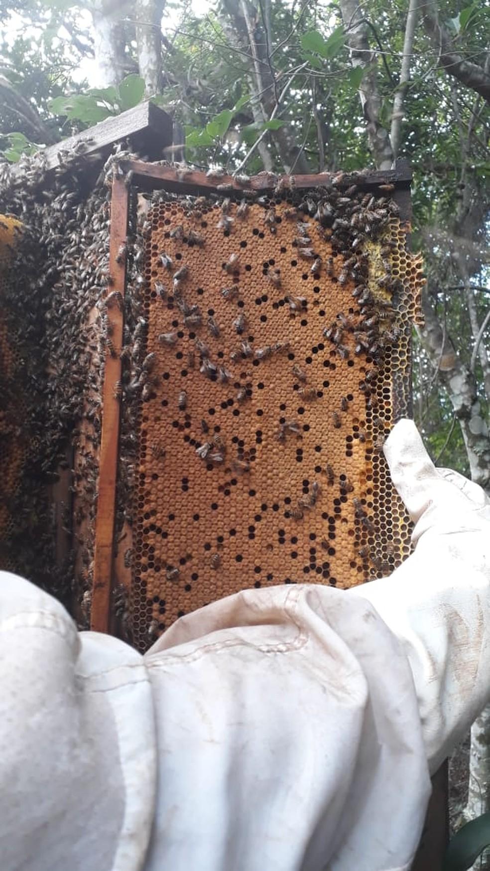 Apicultores registram aumento na produção de mel na pandemia — Foto: Cedida/Lucas Cremonezi