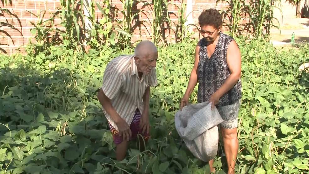 Seu Joaquim Aparecido e Dalva Paula da Silva, que é sua filha adotiva dele, dividem a rotina de cuidados com a plantação (Foto: Reprodução/TV Paraíba)