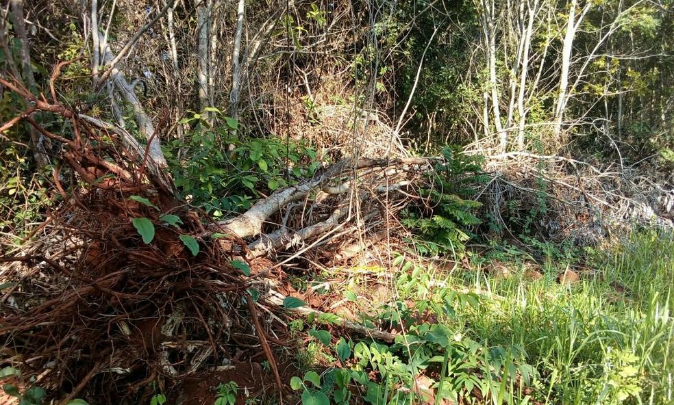 -  Vegetação é nativa de cerrado  Foto: Polícia Militar de Meio Ambiente/Divulgação