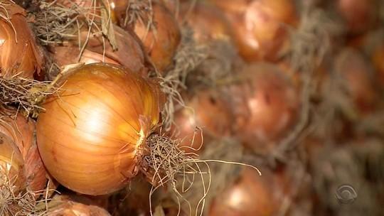 Produtores recebem sementes para produção de cebolas orgânicas no Sul do RS