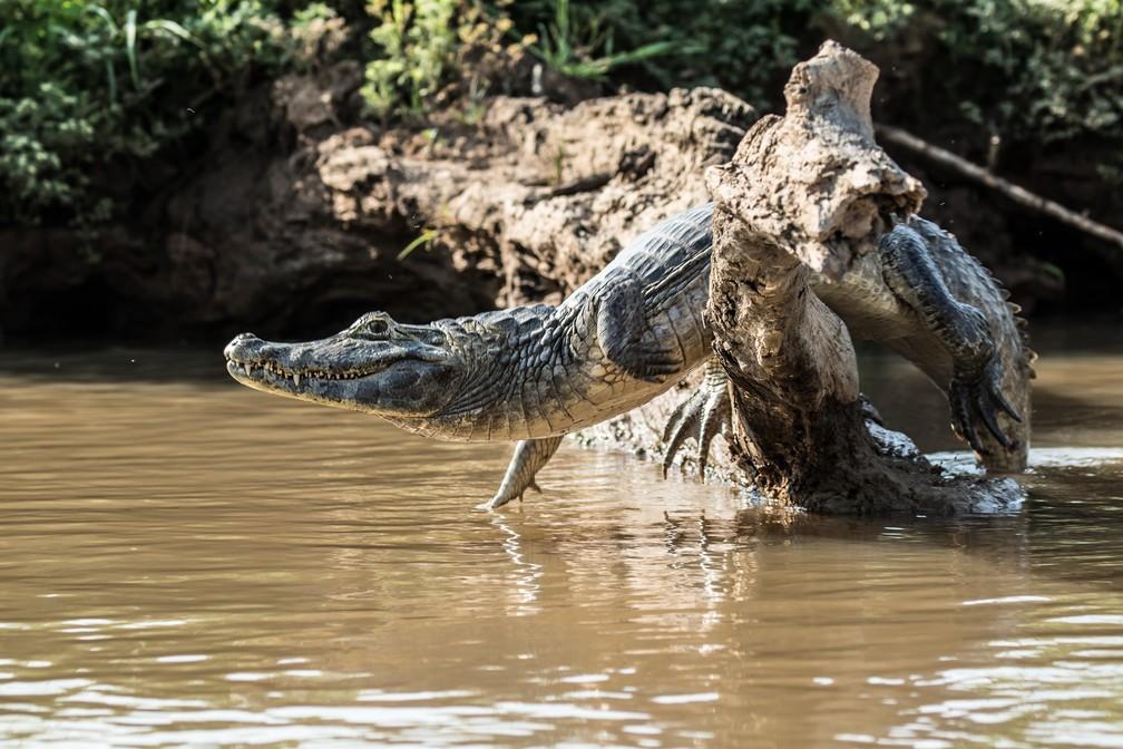 Jeanne já fotografou na Amazônia, Pantanal e Alta Floresta  (Foto: Jeanne Martins/VC no TG)