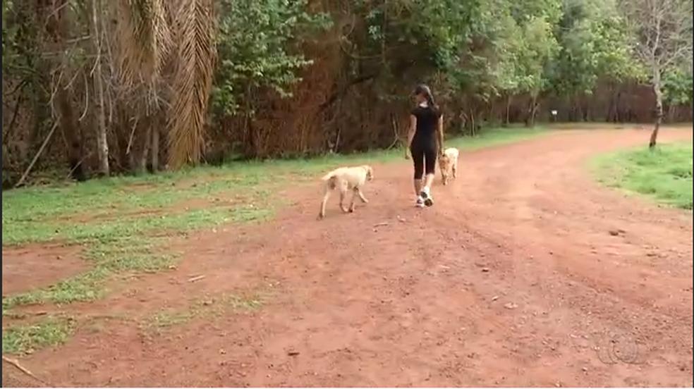 Animais vão na frente dos turistas mostrando o caminho (Foto: Reprodução/TV Anhanguera)