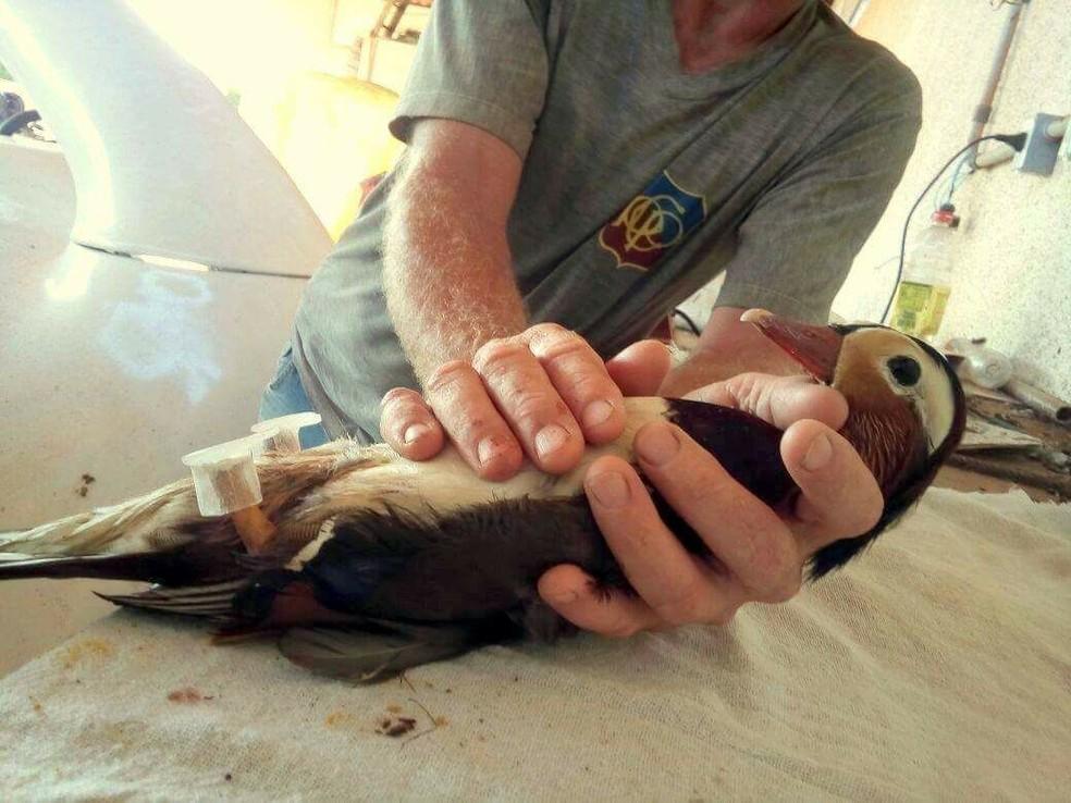 Ideia da prótese veio da veterinária, juntamente com o protista dr. Marcelo Calister (Foto: Arquivo Pessoal)