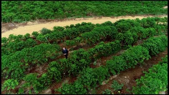 Especialista alerta: 'produtores sem seguro, no futuro, não estarão na atividade agrícola'