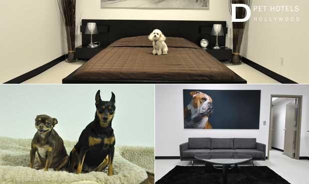 Fotos do hotel especializado em oferecer luxo a cachorros nos Estados Unidos (Foto: Reprodução)