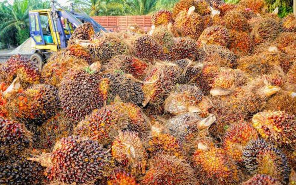 O óleo de palma responde por 35% do óleo vegetal, mas ocupa apenas 10% da terra destinado à produção do produto (Foto: CC0)