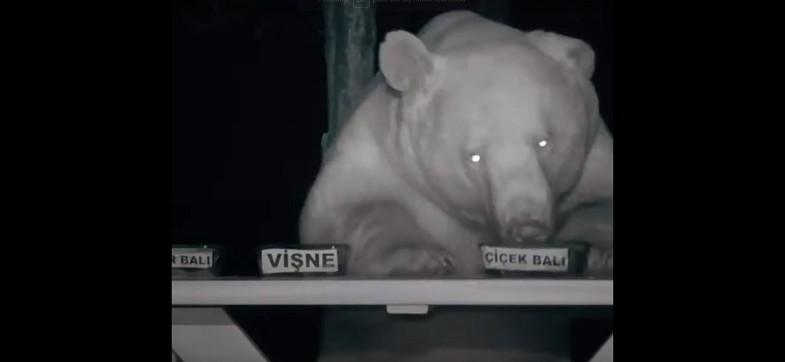 urso-mel (Foto: Reprodução/Youtube)