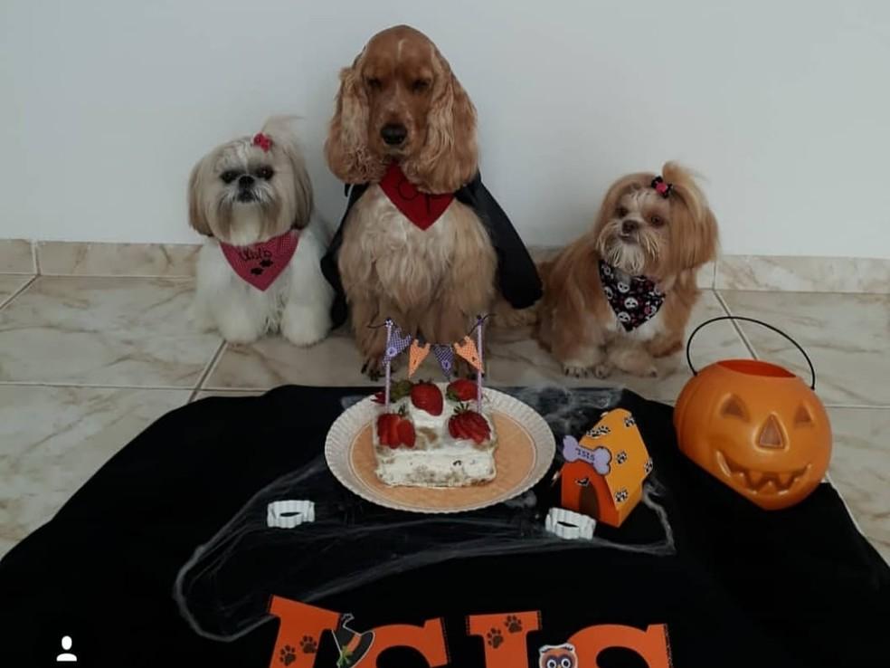 Veterinária de Itapetininga cria bolo de aniversário para cães — Foto: Arquivo Pessoal/Isabelle Domingos