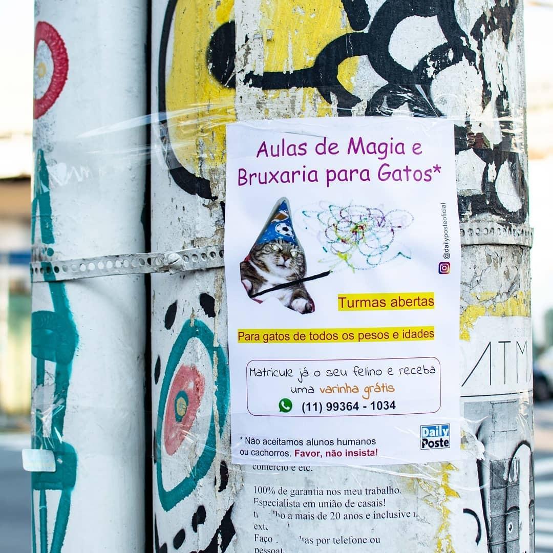 Anúncio de curso de magia para gatos do Daily Poste (Foto: Reprodução)