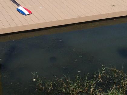 Qualidade da água da Lagoa Rodrigo de Freitas foi questionada (Foto: Vicente Seda)