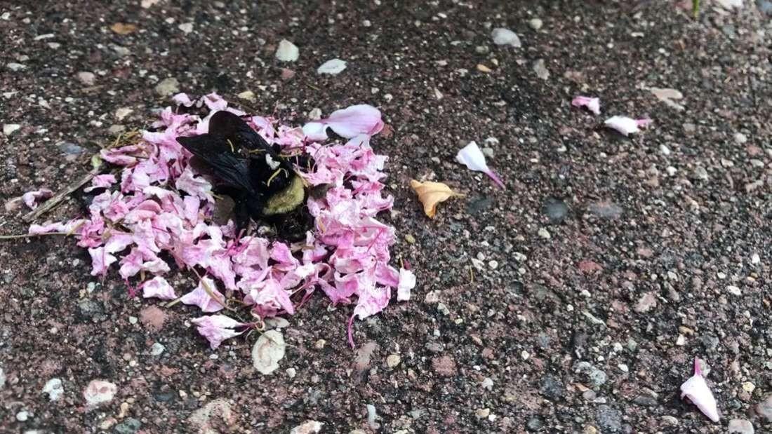 'Funeral' da abelha gera três teorias de explicação por pesquisadores (Foto: Reprodução/YouTube)