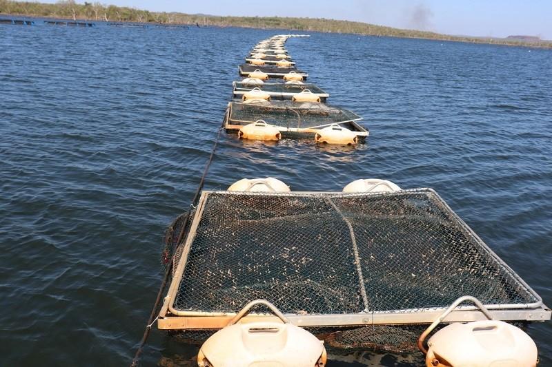 Maranhão alcança 5ª posição em  ranking brasileiro de produção de pescado