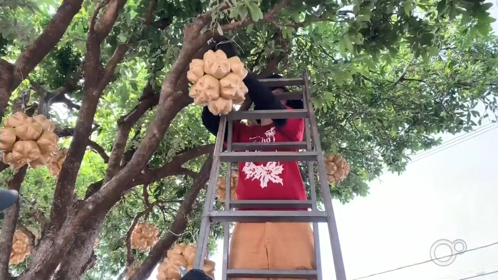 A dois meses do Natal, tradicional decoração de Santa Fé do Sul começa a ser instalada
