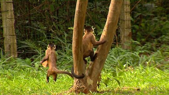Macaco é encontrado morto em Itumbiara e encaminhado para análise em Goiânia