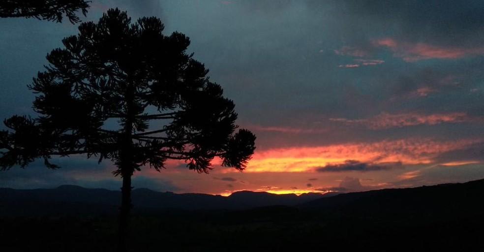 Araucárias são parte da beleza da serra de SC (Foto: Jean Souza/NSC TV)