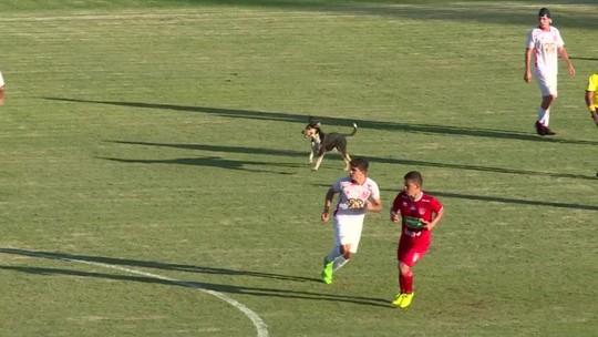 Cachorro invade campo e anima a torcida no Módulo 2 no interior de Minas