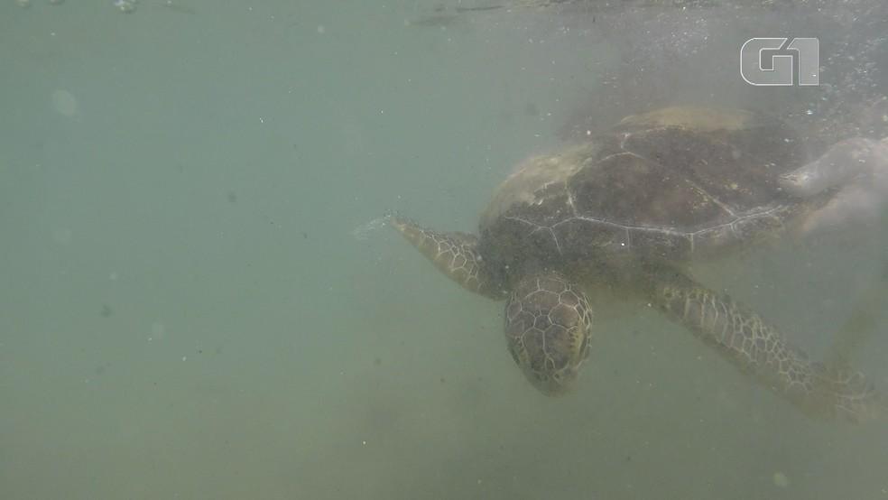 Animal foi devolvido ao mar em Areia Branca, RN, nesta quarta (19) — Foto: Divulgação