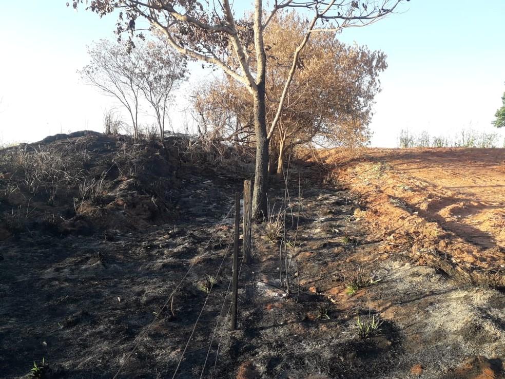 Queimada para limpeza em fazenda em Regente Feijó danificou vegetação nativa — Foto: Polícia Militar Ambiental