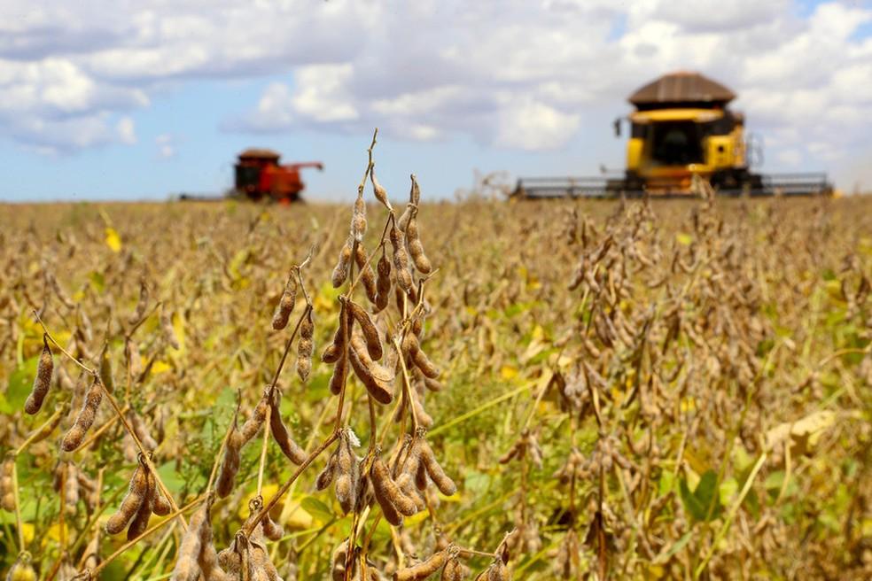 Produção de soja no Brasil dispara   Agronegócios   G1