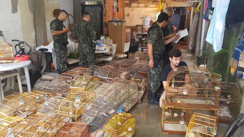 Pássaros foram encontrados dentro de residência, em São Vicente (Foto: Divulgação/Polícia Ambiental)